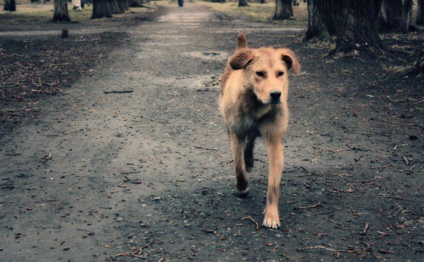 Прокуратура защитила бродячих собак от новороссийских служб