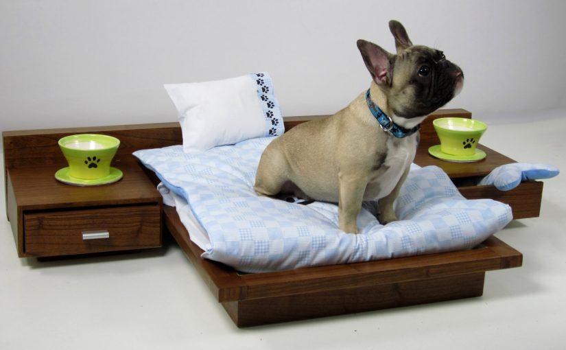 Собаке снять «комнату» в Новороссийске чуть дешевле, чем человеку