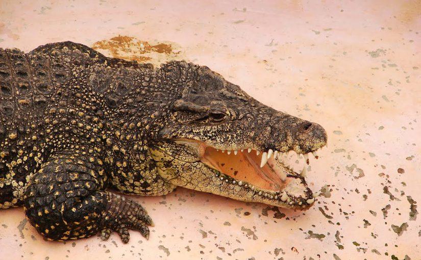 Пообщаться с птицами Новороссийске можно за 500 рублей, а покормить крокодила в Анапе – за 800