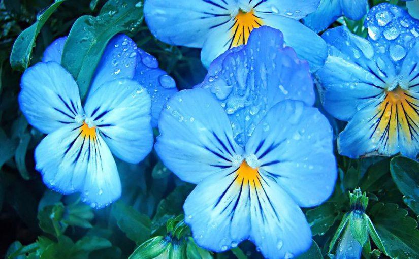 Для районов Новороссийска купят цветы на 1,5 миллиона рублей