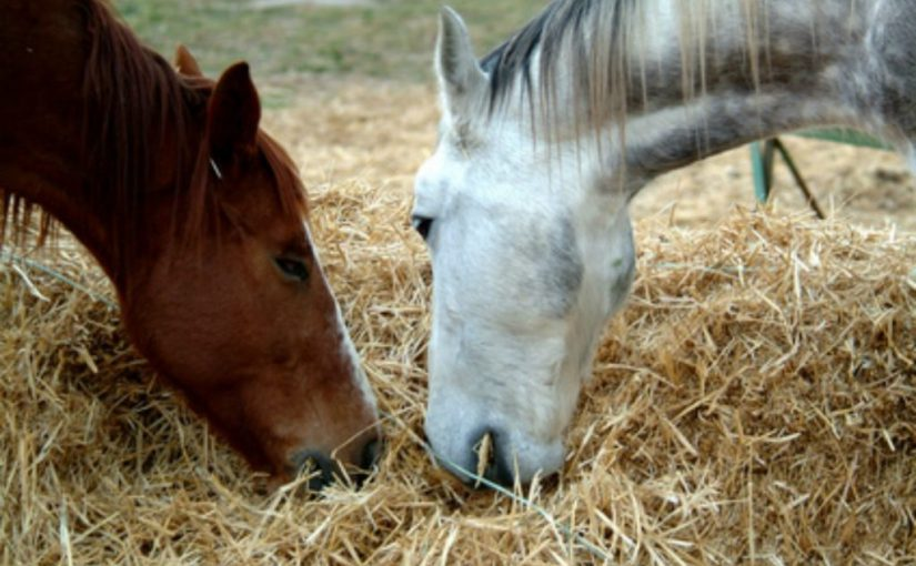 Лошадям в Абрау-Дюрсо было плохо