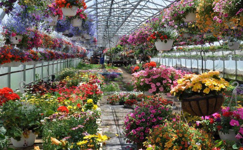 В Новороссийске построят собственные теплицы для цветов