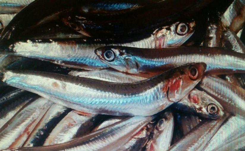 Край выделил 7 млн. руб. на вылов и переработку рыбы в Новороссийске