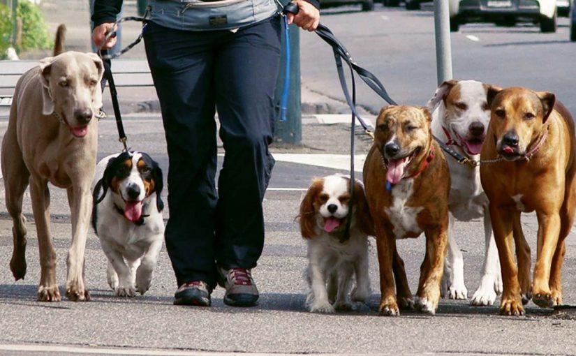 Новороссийцев 55 раз предупредили о том, где нельзя выгуливать собак
