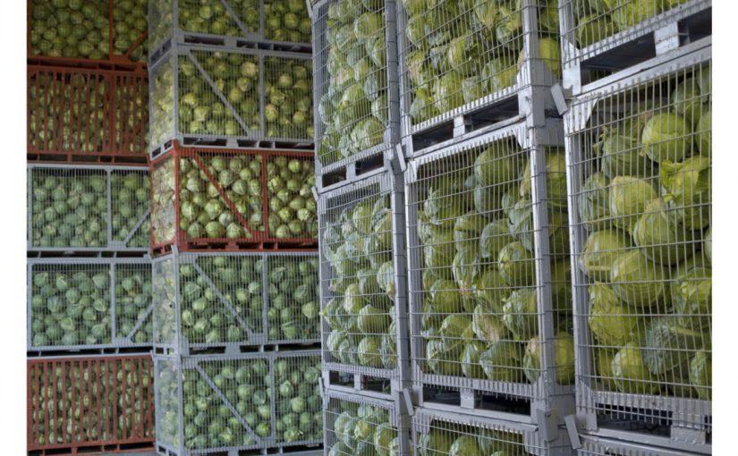 Несостоявшийся мэр Новороссийска планирует перерабатывать сельхозпродукцию