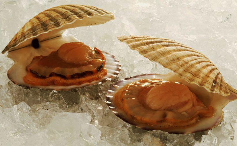 На Шесхарисе собираются построить фермы по разведению морских деликатесов