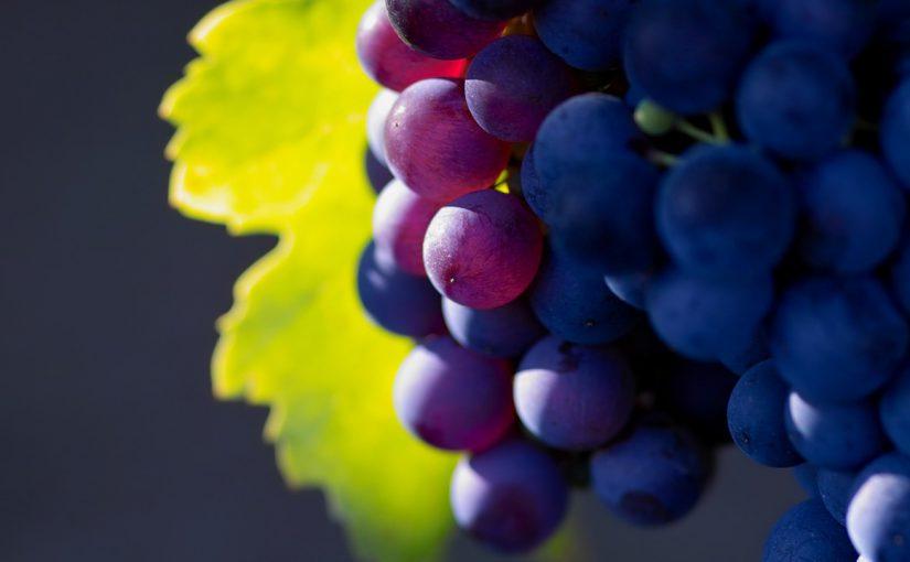 Виноградарская компания из Новороссийска больше не банкрот