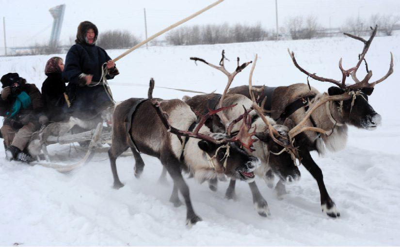 Новороссийцев пригласили на соревнования оленеводов