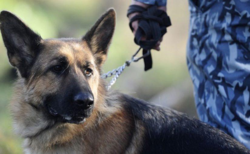 В Новороссийской таможне собак оденут, обуют, дадут понюхать взрывчатку