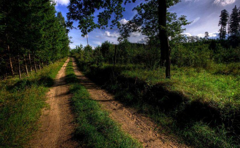 Лесная дорога привела новороссийцев к вице-губернатору