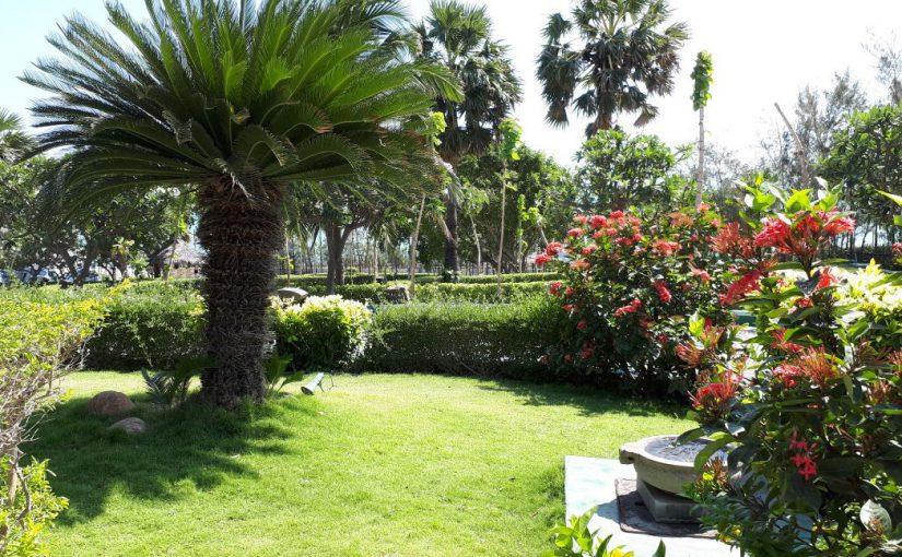 На 6 новороссийских сотках можно разбить индийский сад