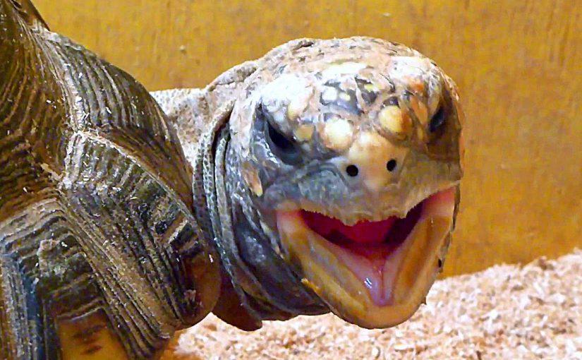 В 30 километрах от Новороссийска поправят здоровье 60черепах