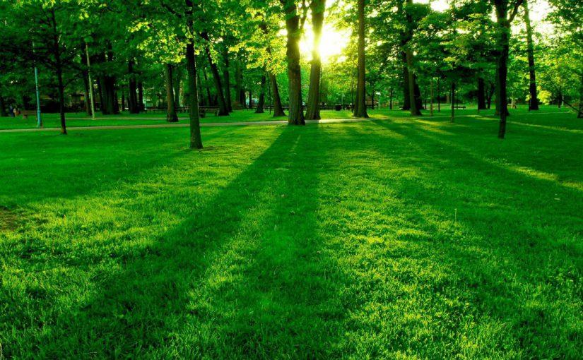 Новороссийцев спрашивают, где «застолбить» зеленые зоны — без застройки