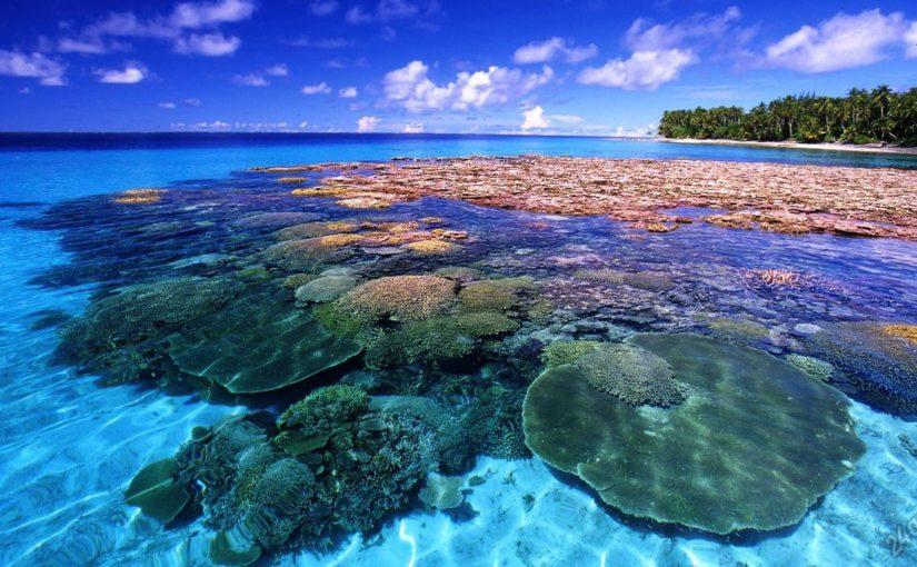 Черное море спасут искусственные рифы