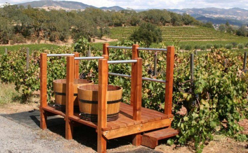 Компании «Абрау-Дюрсо» запретили ввозить саженцы винограда из Франции