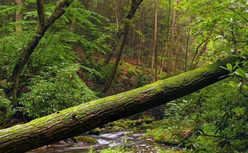 В Геленджике отец закрыл сына от падающего дерева