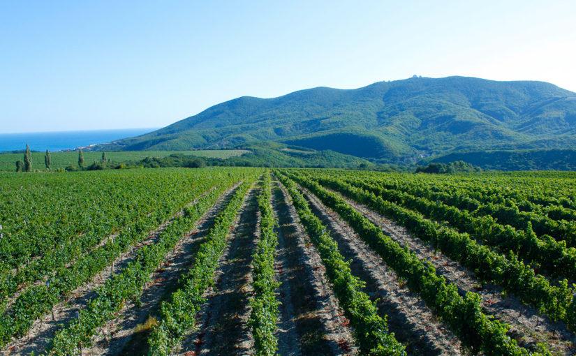 Главбух агрофирмы «Мысхако» скрыла 90 млн. руб. налогов