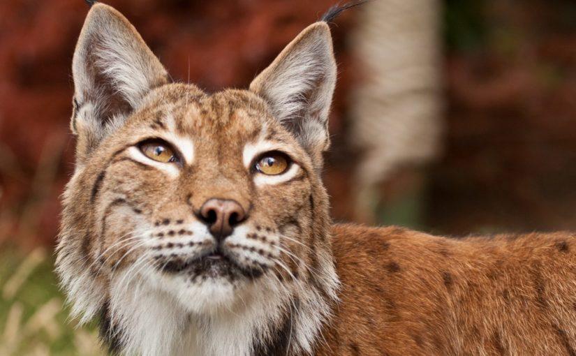 В частном доме Новороссийска жили два десятка «нелегальных» животных – волки, львы, ягуары