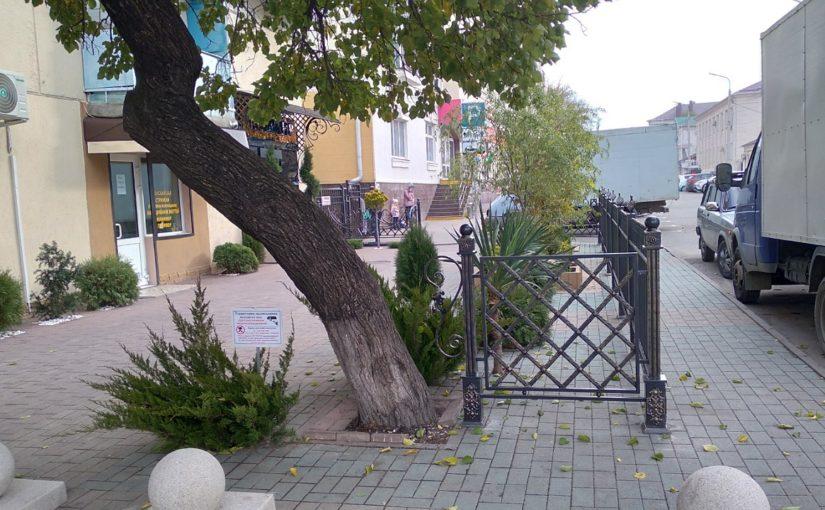 В Новороссийске палисадник с изюминкой – кусты растут из тротуара (видео)