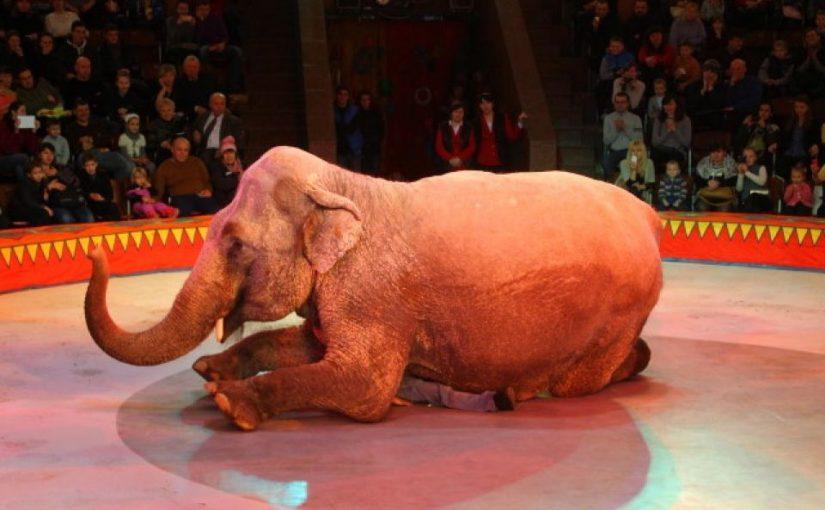 В Новороссийске никак не найдут место слонам
