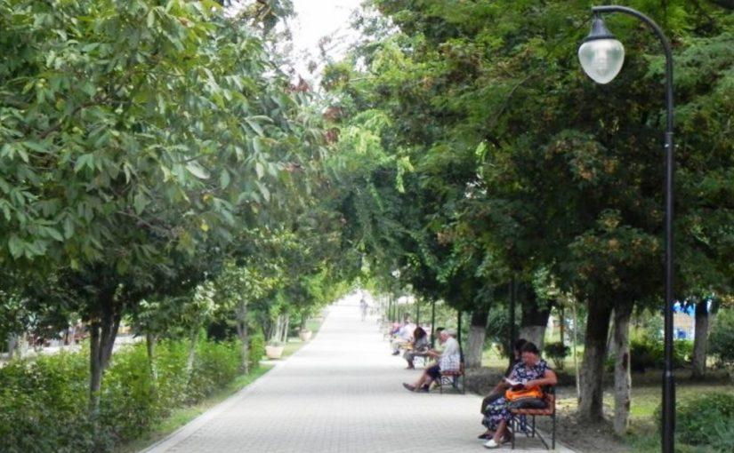 В парке Фрунзе Новороссийска спилят 76 деревьев. Старых и сухих?