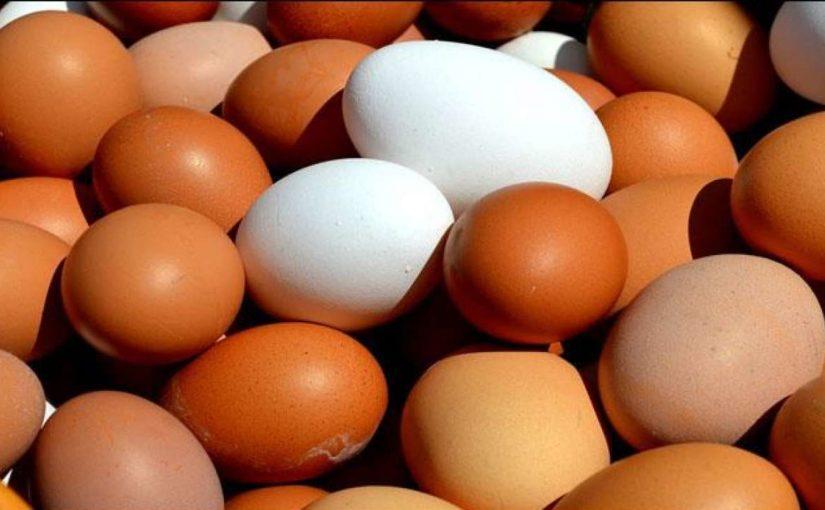 В Новороссийске планируют построить комбикоромовый завод для птицефабрики – подешевеют ли яйца?
