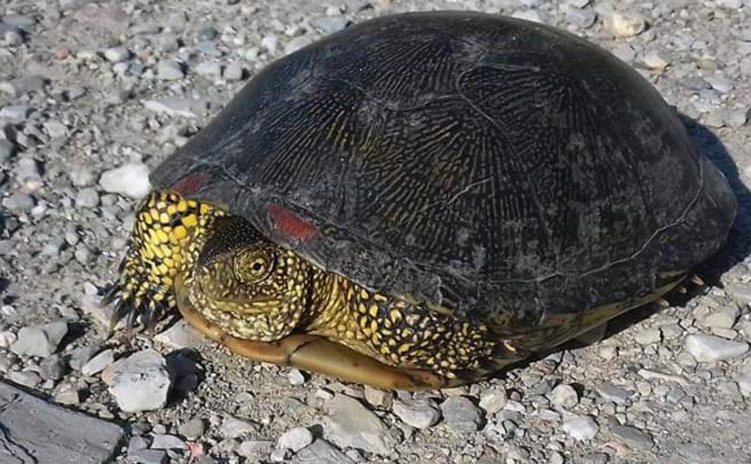 Куда девать черепах из Южных прудов Новороссийска?