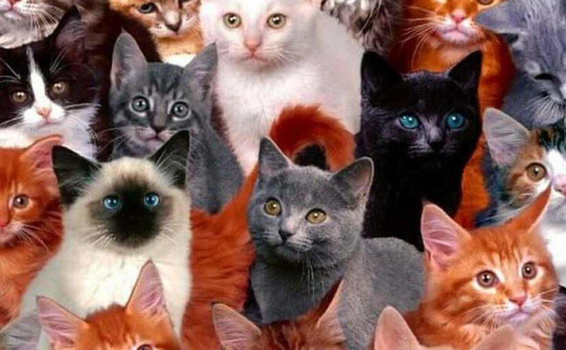 Кот из Новороссийска, которого хотели продать за 20 млн. руб., вошел в десятку самых популярных в России