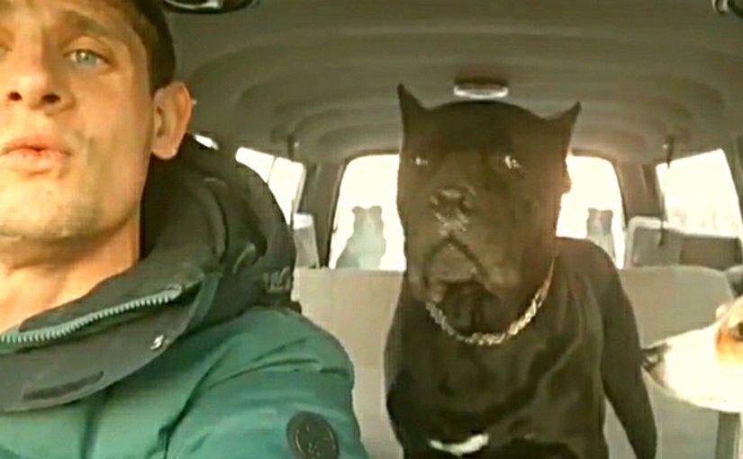 В Новороссийске собака вместе с хозяином пели новогоднюю песню (видео)