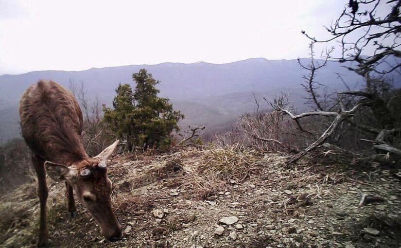 Каких животных «поймали» в фотоловушки на Маркотхе