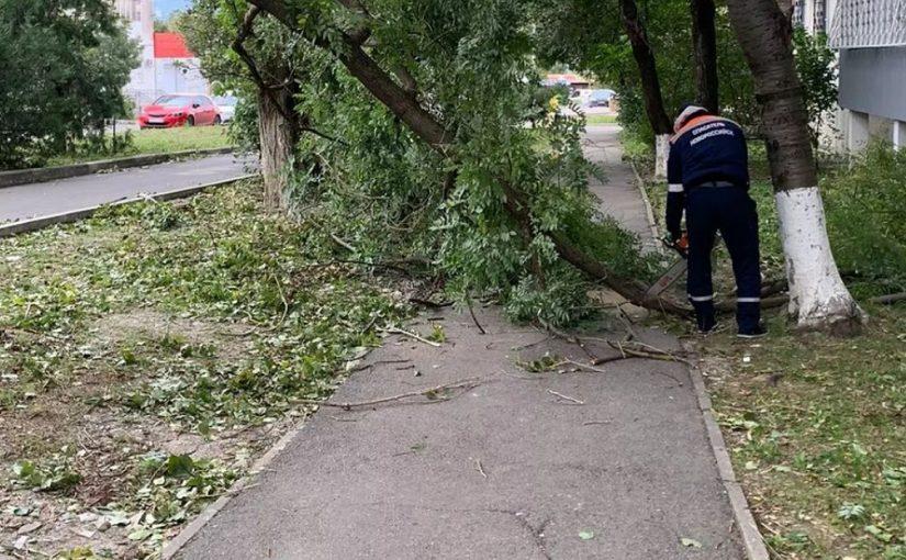В Новороссийске и окрестностях норд-ост ломает деревья и переворачивает автомобили (видео)